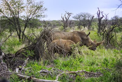 Dating tjeneste savannen ga
